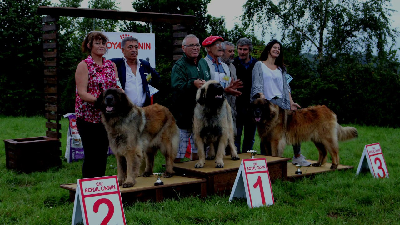 Spanish Leonberger Club Show 2016