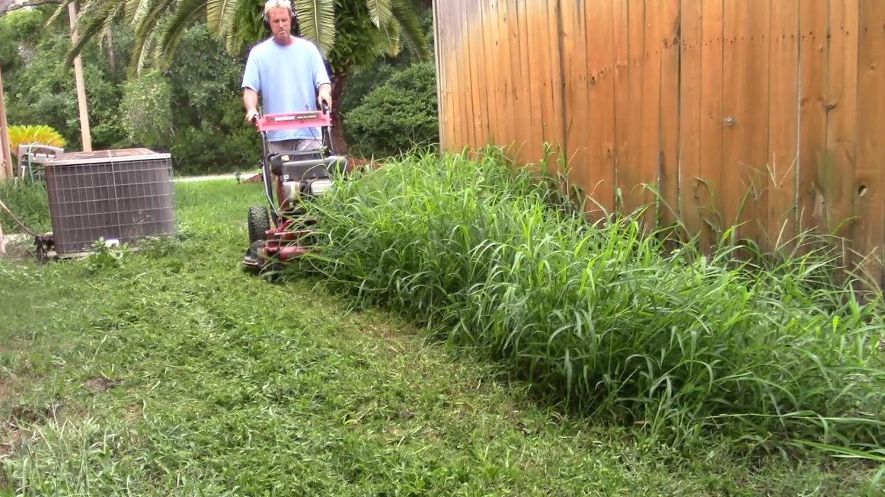 Lawn care vlog 41 new yard tall grass clean up doovi for Tall outdoor grasses