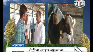१३ जातीच्या शेळ्यांचं पालन,  कृषीपदवीधर शेतकऱ्याचं शेळीपालन | Success story of  Goat farming