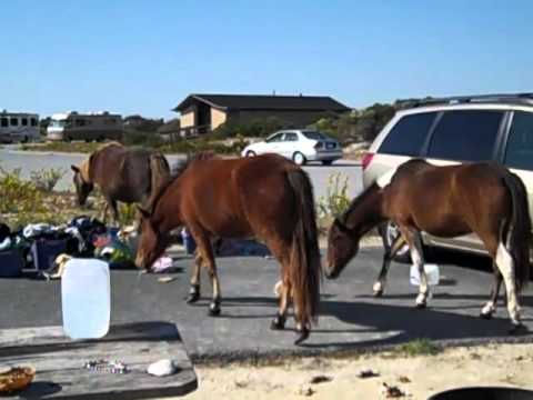 How To Get To Assateague Island From Ocean City Maryland