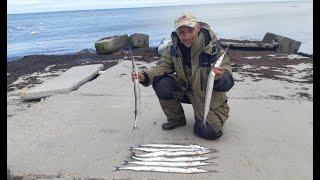 НЕ ПРОГАДАЛ С РЫБАЛКОЙ Ловля Саргана в Балтийском Море Коптим рыбу