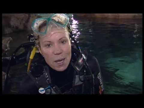 Dianne swims with sharks