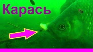 30-Поклевка карася под водой. Crucian fishing. Рыбалка. Ловля карася на поплавок.(Поклевка карася на поплавочную удочку - Подводная съемка. underwater. Crucian fishing..….((Мой канал- это (в основном)..., 2014-07-22T07:29:00.000Z)