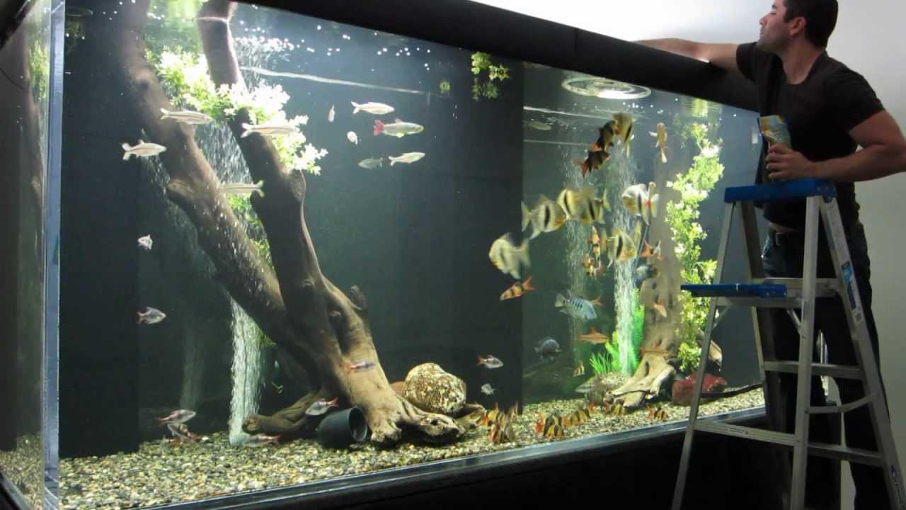 Huge aquarium youtube for Big fish tanks