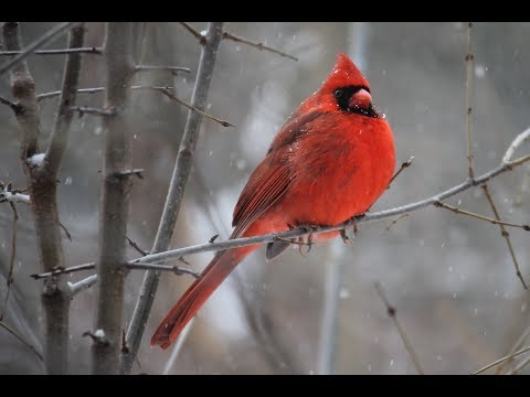 Peaceful Relaxing Music, Instrumental Meditiation Music, with Birds Singing