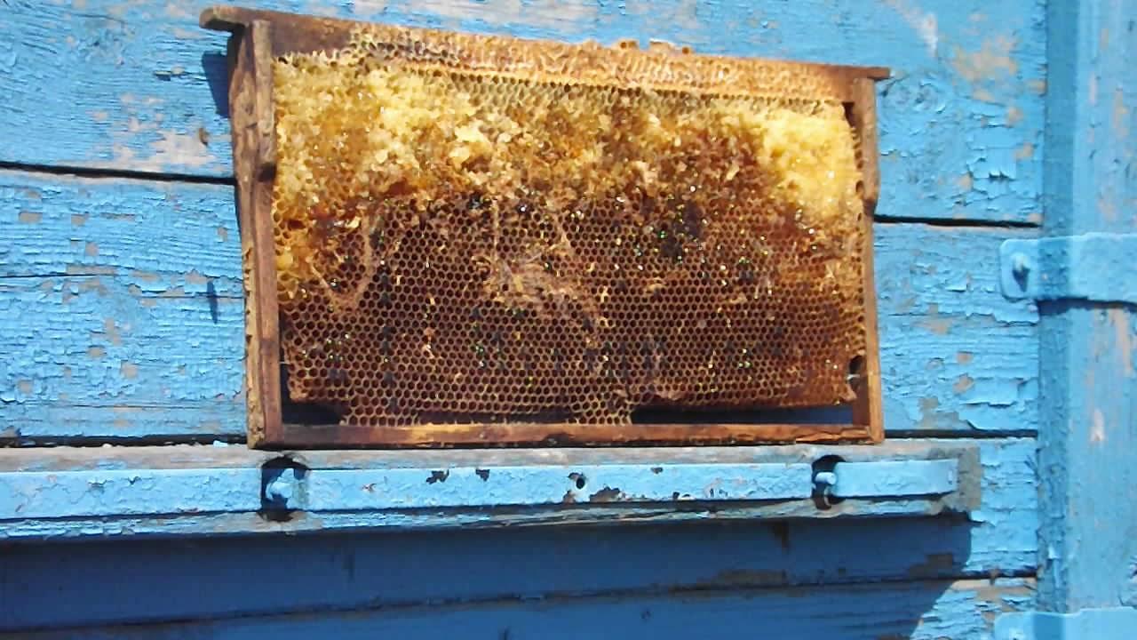 картинки наш улей нападают чужие пчелы и что делать