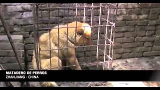 La ONG Igualdad Animal documentó en un video el cruel comercio de piel de perro y gato en China