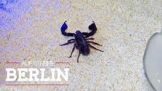 Gefährlicher Stich vom Skorpion! Er kam mit der Post! | Auf Streife - Berlin | SAT.1 TV