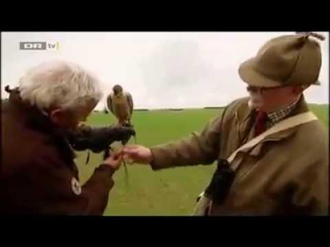 Falcon on Danish TV