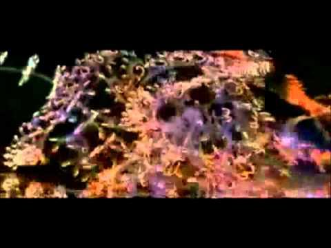 Hackers (1995) Music Video