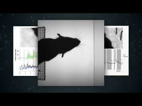 Cellular Mechanisms of Brain Function | EPFLx on edX | Course About Video