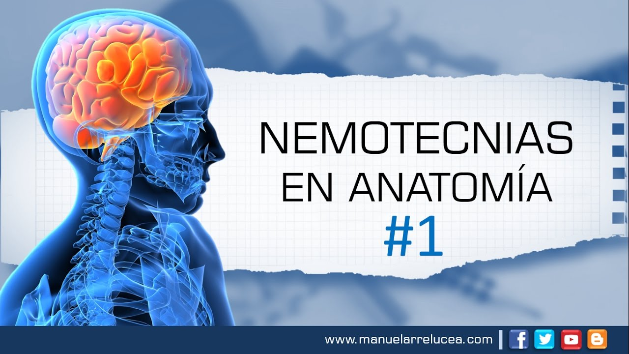 NEMOTECNIAS EN ANATOMÍA #1 - YouTube