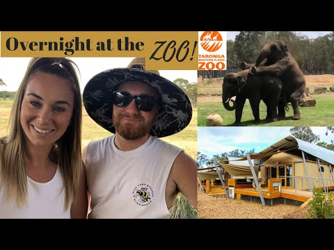 Ep 35: STAYING OVERNIGHT IN THE ZOO!! // Behind The Scenes | What Did We Just See!? | Zoofari Review