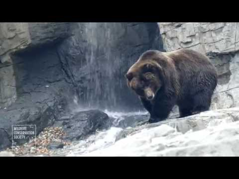Central Park Zoo Brown Bears
