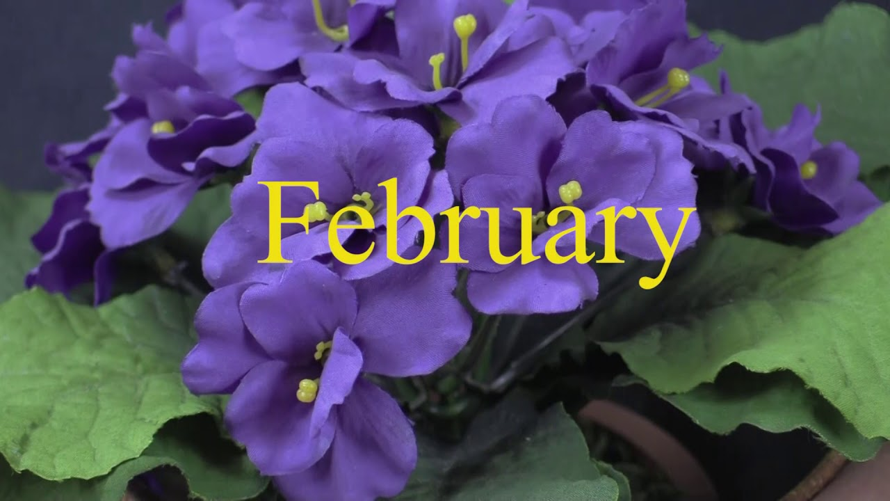 February Birthday Flowers Violet And Primrose I Thinkflorist Youtube