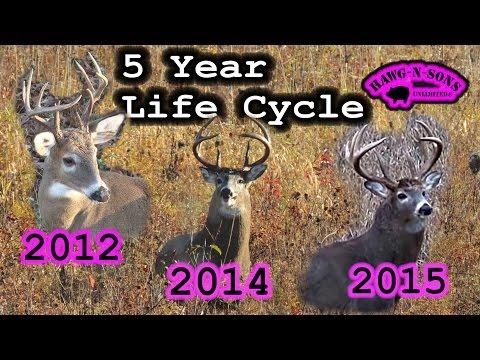 "Hunter Education Whitetail Deer ""Non Typical"" Antler Development Genetics Facts"