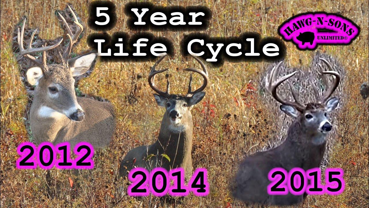Hunter education whitetail deer non typical antler development genetics facts also rh youtube