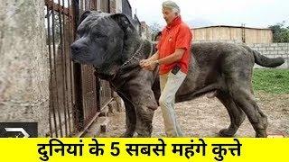 ये है दुनियां के 5 सबसे महंगे कुत्ते ? कीमत जानकर होस उड़ जायंगे | TOP 5 EXPENSIVE DOGS