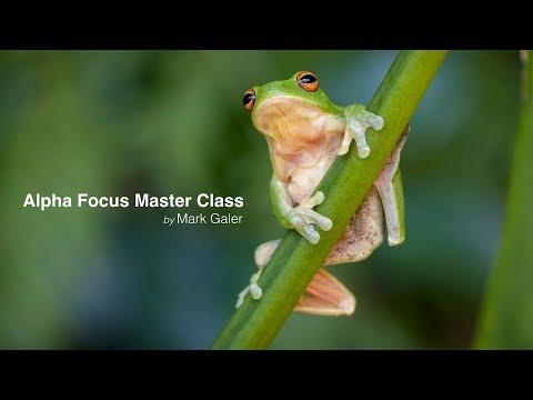 Sony Alpha Focus Masterclass