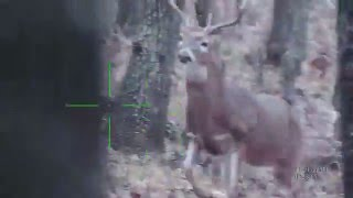 Daytime Deer Hunting with ATN X-Sight 5-18