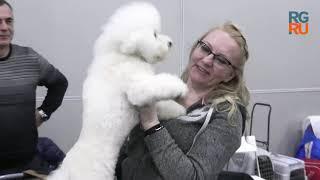 Выставка собак ''Россия-2018'': самые интересные кадры первого дня