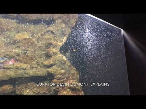 A closer look at baby octopi