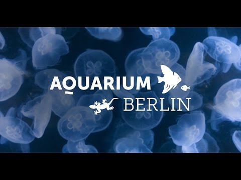 Zoo Berlin Aquarium 2016