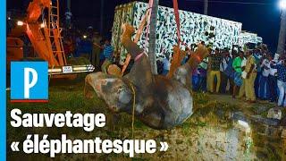 Un éléphant tombé dans un puits de 20 mètres sauvé à l'aide d'un grue en Inde