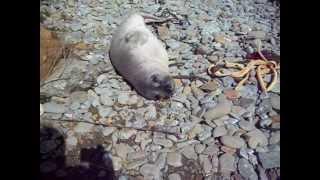 I pet a seal!