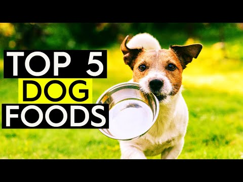 ✅ TOP 5: Best Dog Food 2019