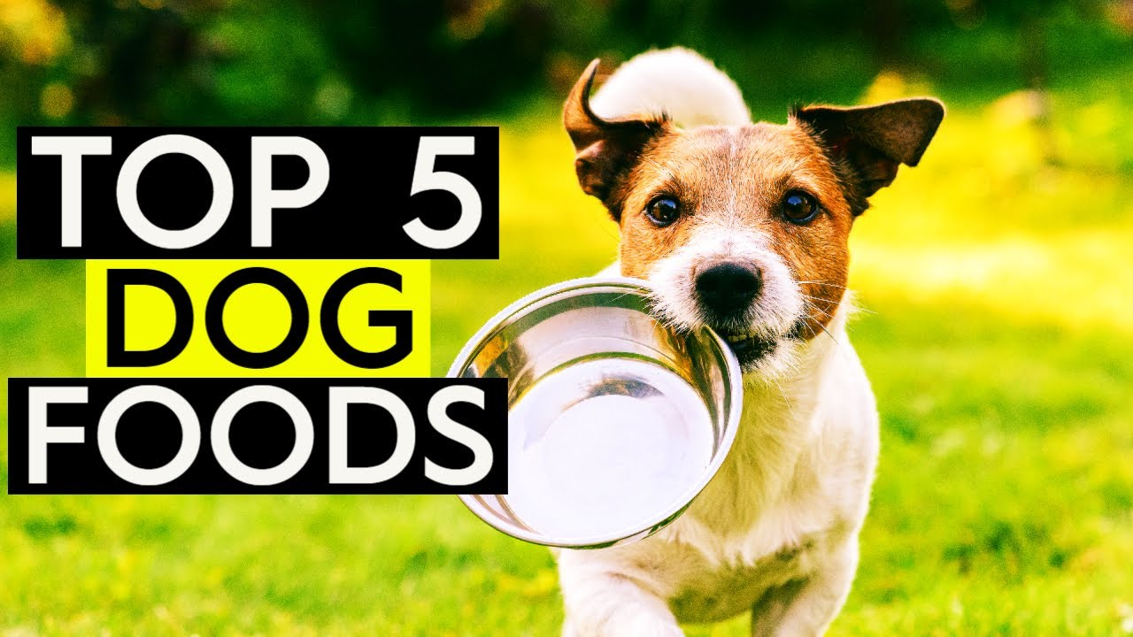 Best Rated Dog Food >> Top 5 Best Dog Food 2019