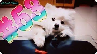 Приколы с животными №53   Маленькая собачка и сосиска HD собаки Смешные животные  Animal videos