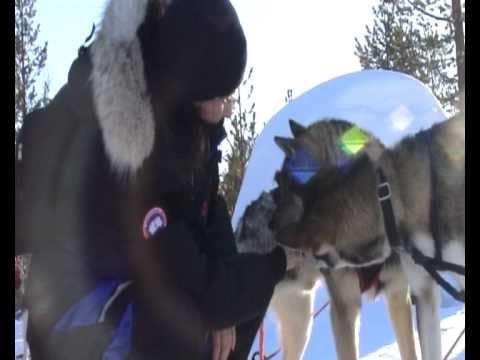 Experience Hetta Huskies