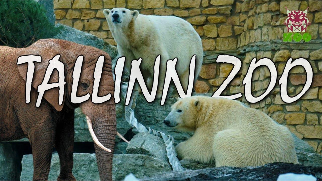 Tallinn ZOO | Таллиннский зоопарк | Tallinna loomaaed