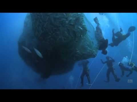 Human Planet | Oceans: The mass fishing technique known as 'Pa-aling' | Sundays,  7.30pm, ABC1