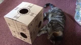 Интерактивные игрушки для кошек Catit Senses 2.0