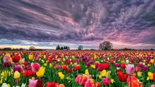 Kumpulan Bunga-Bunga Warna Warni Terindah