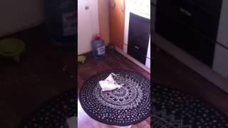 Кота оставили без еды