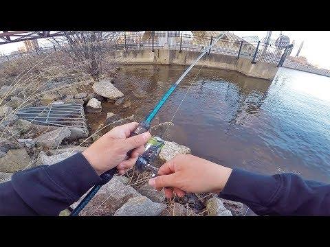 Downtown CITY Bridge Fishing! (Urban Angling)