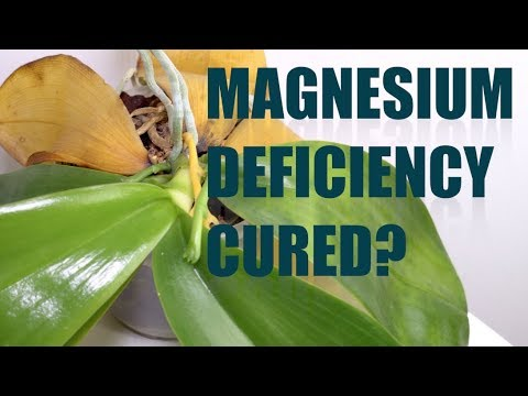 Magnesium Deficiency Cured? One Year On Epsom Salts Update