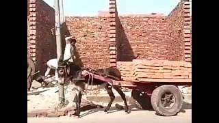 Pakistani funny video hd 2018 new from punjab