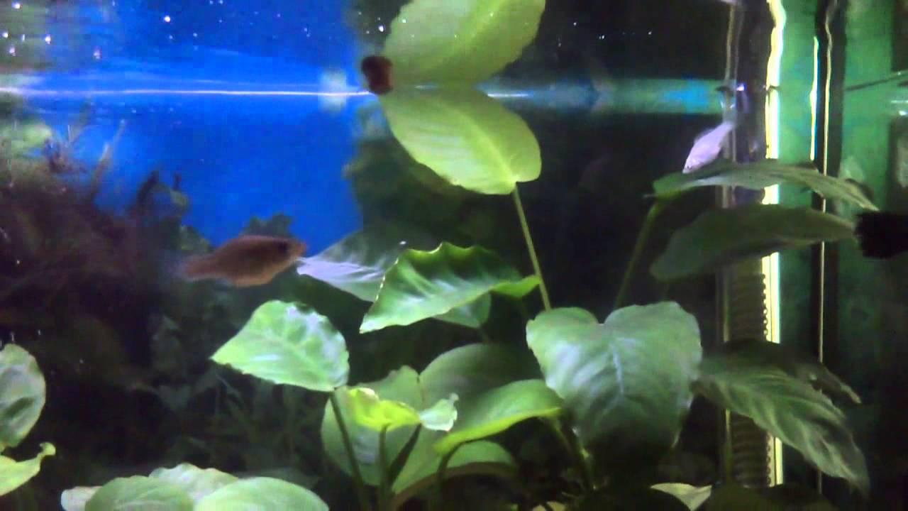 Fruta para peces el mejor sustrato para plantas de for Mejores peces para acuario