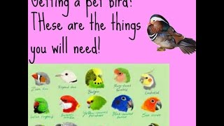 Things you will need (when getting a bird) | SimpliRandom