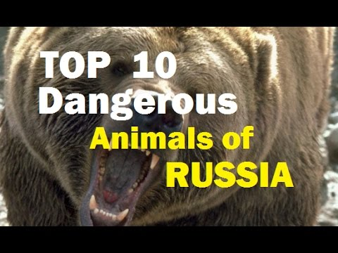 TOP 10 Dangerous Animals RUSSIA 2017 - Kevin Hunter