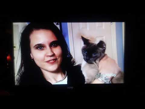Cats 101 Cat Behaviorist Ingrid Johnson's Colorpoint Shorthairs