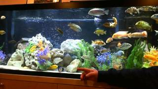 thank you a view of my beautiful 125 gallon african cichlid aquarium tank