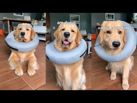 I Am Donut!