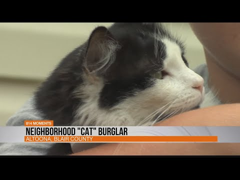 "Neighborhood ""Cat"" Burglar"