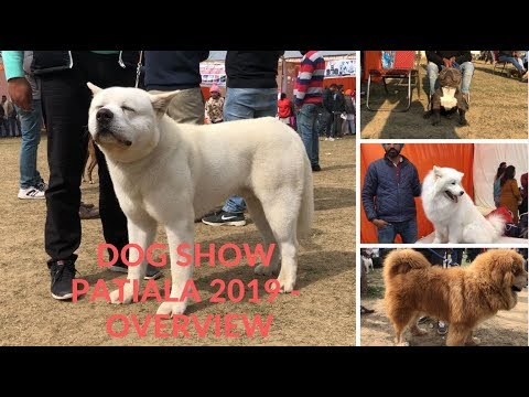 Dog Show Patiala 2019 - Overview