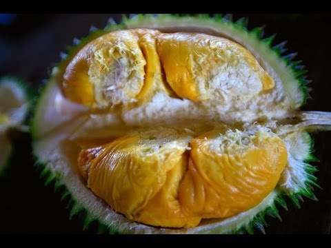 Bao Sheng Durian Farm Durian tasting with Bao Sheng the best organic durian in the world!